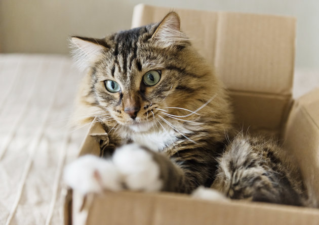 VALERIYA VIA GETTY IMAGES You can take a cat out of the box but — well, actually you probably shouldn't try it.