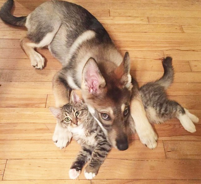 dog-picks-kitten-out-of-shelter-raven-and-woodhouse-instagram-1