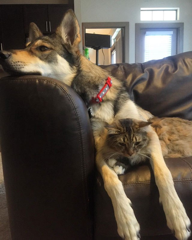 dog-picks-kitten-out-of-shelter-raven-and-woodhouse-instagram-10
