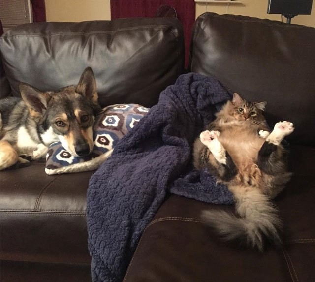dog-picks-kitten-out-of-shelter-raven-and-woodhouse-instagram-8