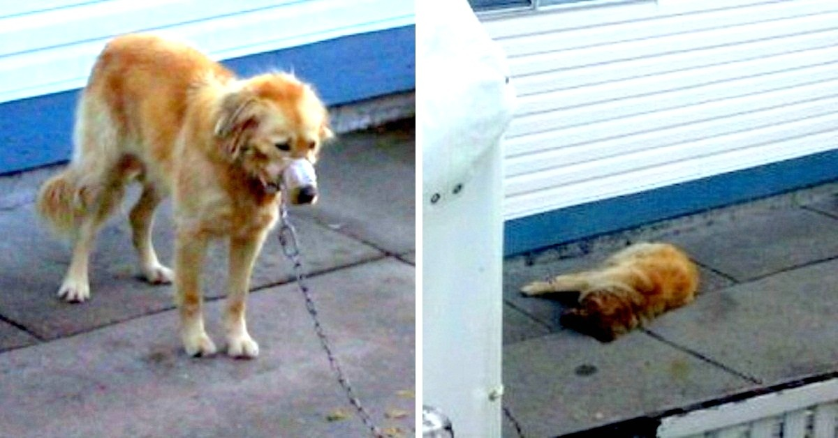 Owner Beats & Tapes Dog's Muzzle – Neighbors Break into His Yard to Rescue the Poor Animal