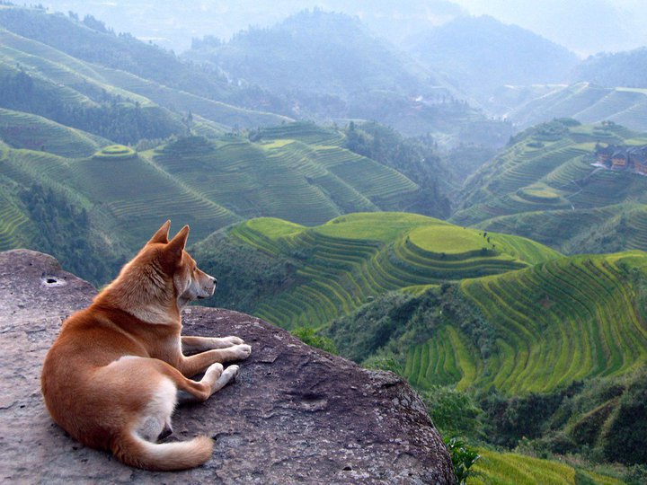 dog-in-nature