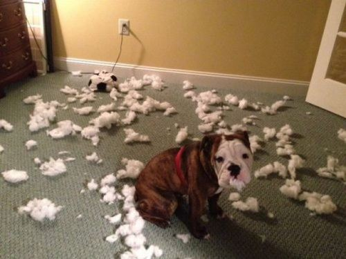 dog-in-trouble