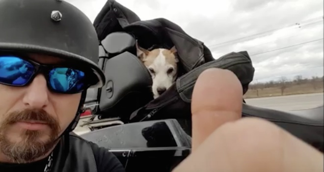 Biker Notices Tiny Dog Being Beaten On The Highway And Pulls Over