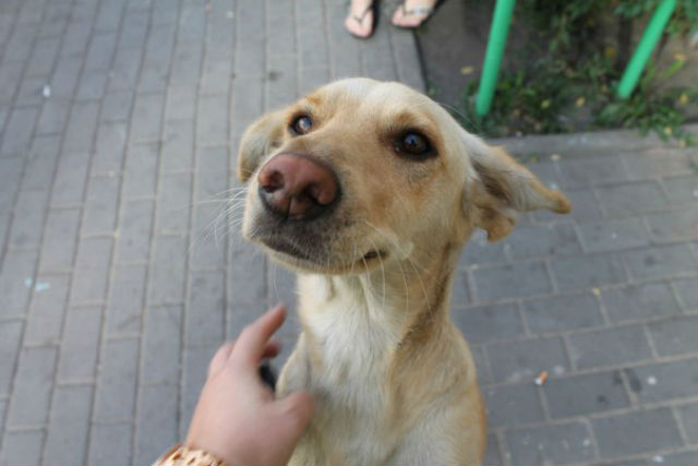 "Source: ""Right to life"" Help animals. Voronezh"