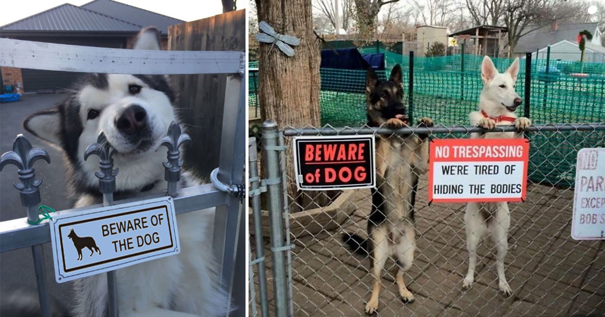 14 Dangerous Dogs Behind Those Beware Of Dog Signs
