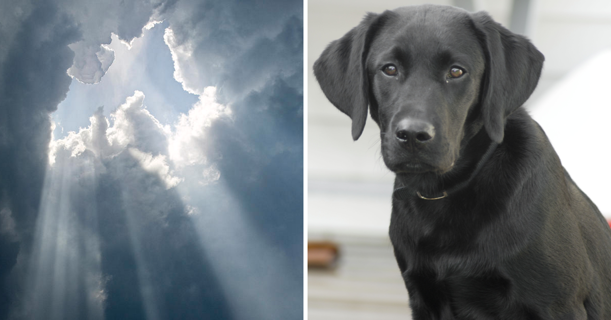 """God"" Responds to Little Girl's Letter after Her Dog Passes Away"