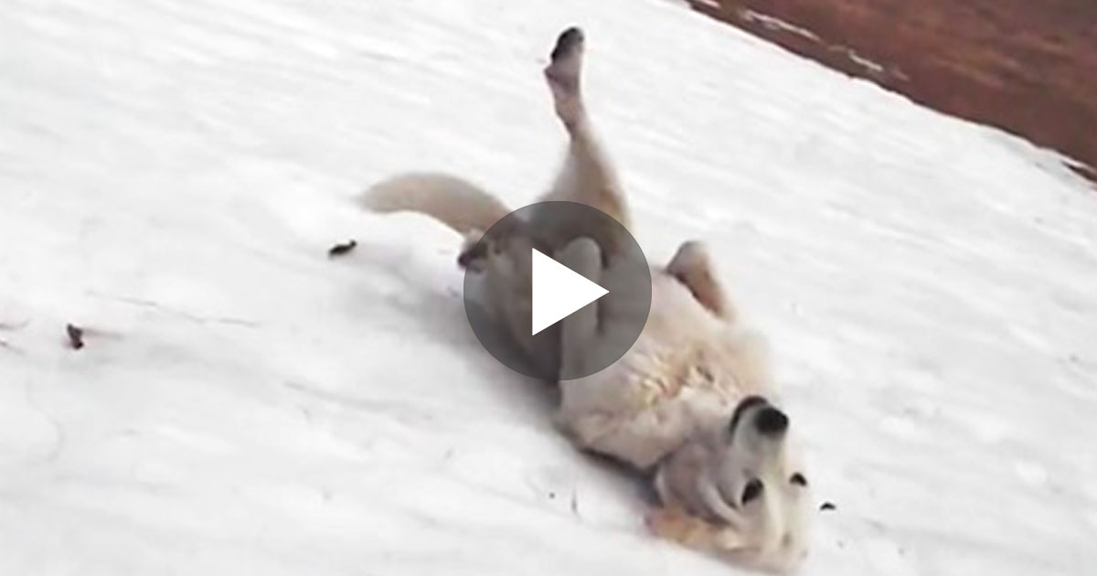 What they caught their dog doing here will have you laughing out loud!