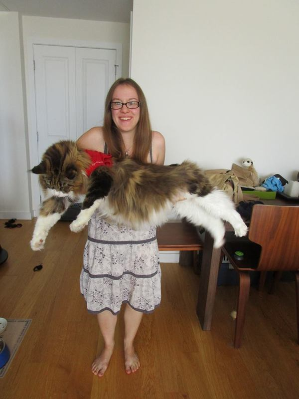 This Cat Weighs 35 Lbs And Is 48 5 Inches Long Here Are