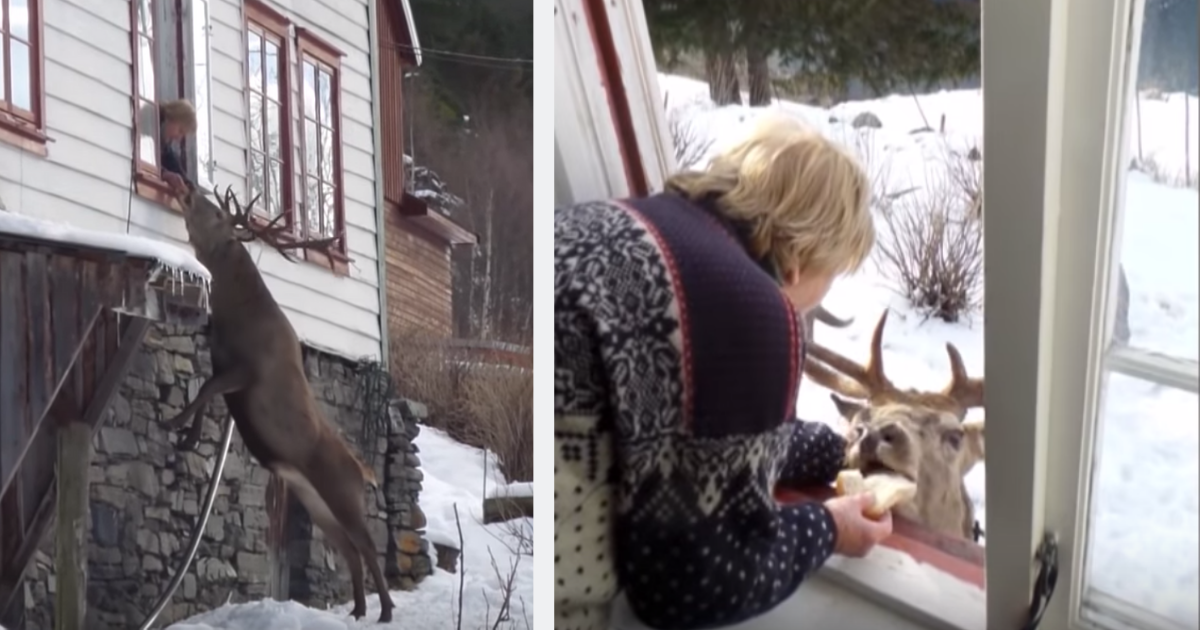 Elderly woman gets visits from a stag each day but not everyone who has seen it is pleased