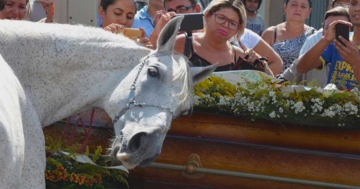 Horse Attends Owner's Funeral, Catches His Scent And Breaks Down