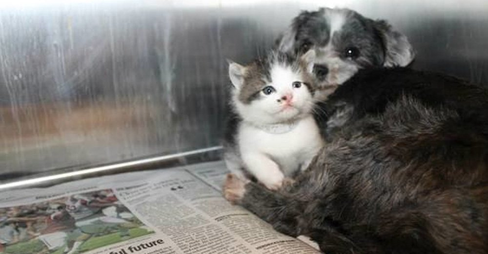 Homeless Non-pregnant Dog Starts Lactating to Nurse an Abandoned Kitten