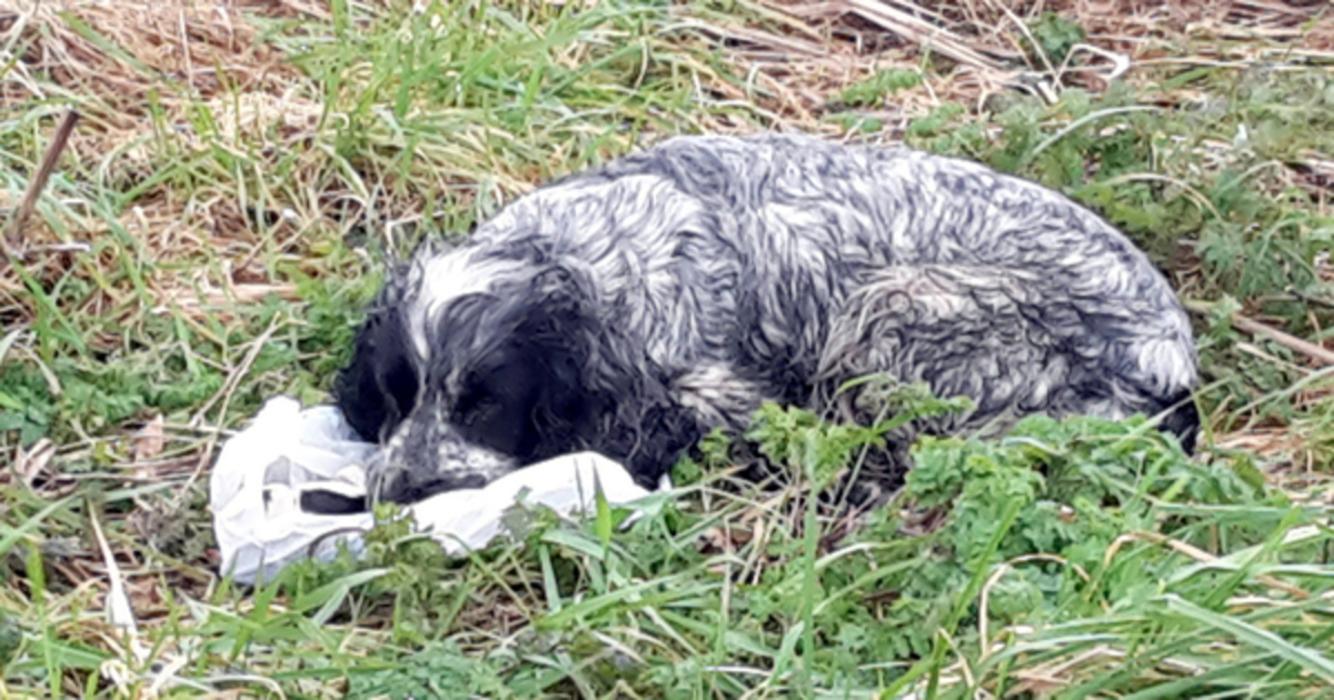 Abandoned Dog Refuses to Leave Bag In the Ditch – When Cyclist Spotted it, He Realizes The Unthinkable