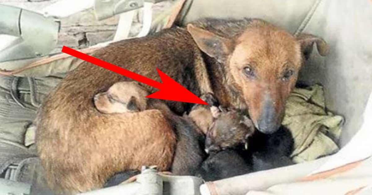 Stray mother dog saves baby from freezing to death