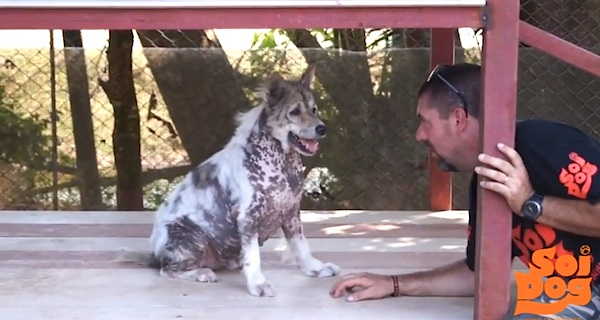 Dog Performs Happy Dance Upon Realizing He's Been Adopted After 4 Long Years At Shelter