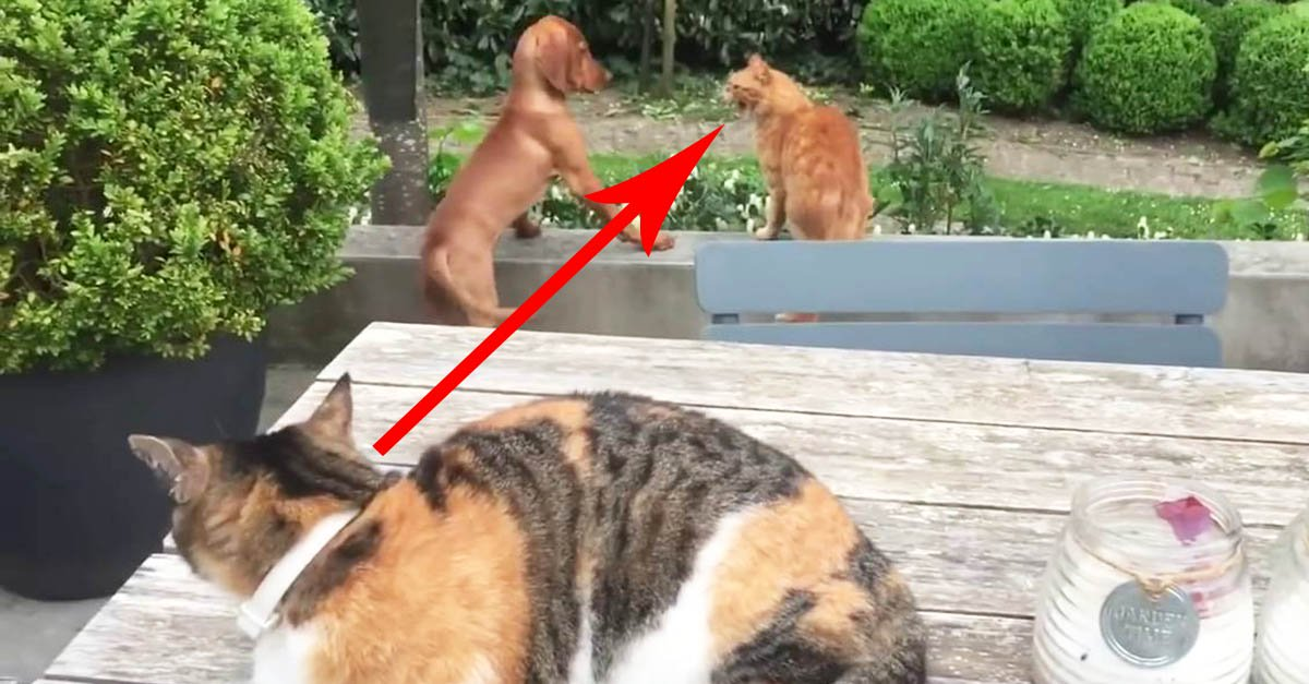 Cat Sees Another Cat Bullying His Doggy Friend And Has Hilarious Reaction…