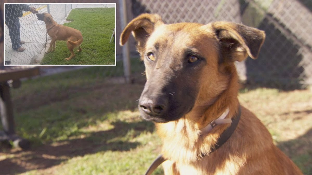 Dog That Watched Her Family Adopt Another Pet at Shelter Finds New Family