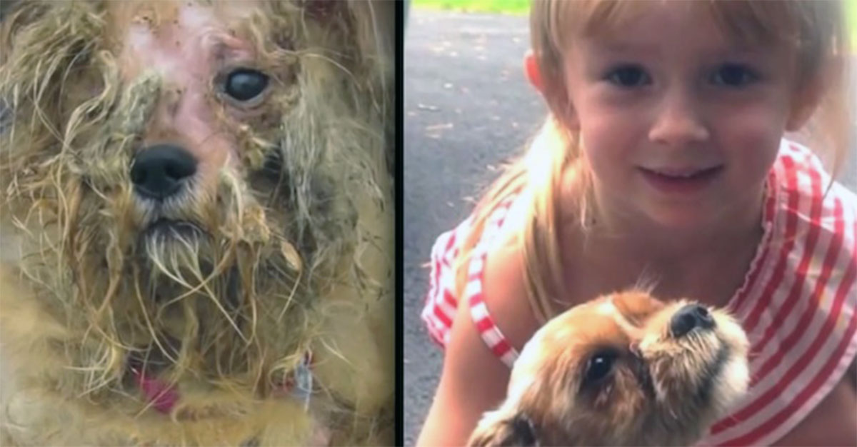 Stray Dog Had Given Up On Human Love Until She Met A Little Girl That Renewed Her Faith