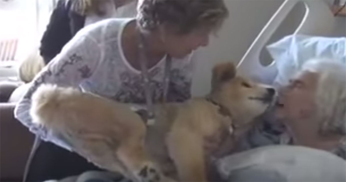 Dying Woman Holds 19 y/o Service Dog Close to Her, Dog's Next Move Brought Everyone To Tears