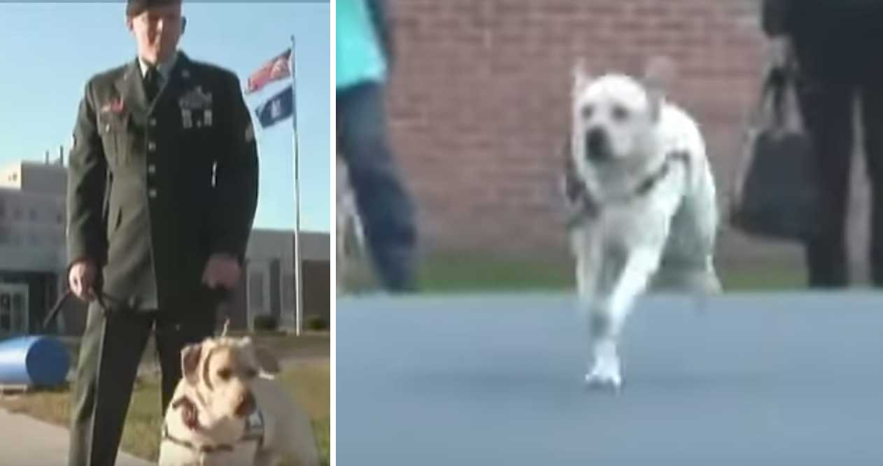 Veteran Visits Prison With Service Dog – Then Dog Sprints Towards Inmate