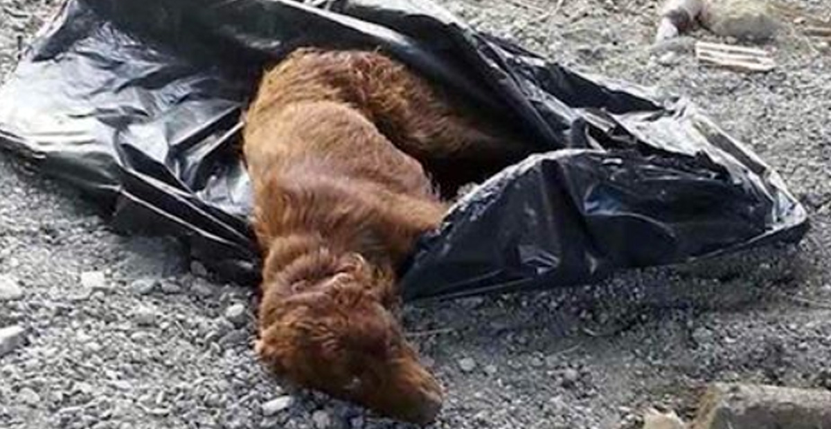 Tied Up Pooch In A Trash Bag By The River Was Rescued – In The Nick Of Time