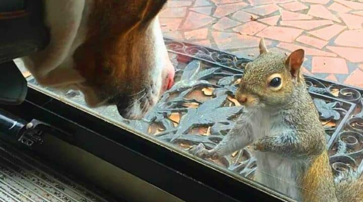 This Squirrel Continued To Tap On Their Window For 8 Years – Until They Saw What She Wanted To Show Them!