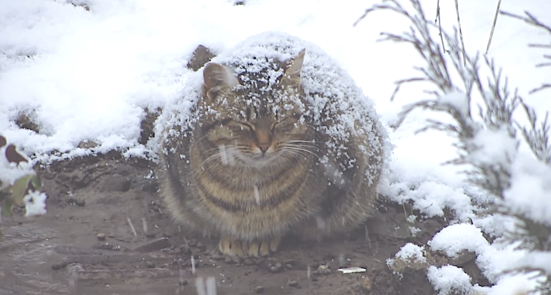 Pregnant cat freezing out in the snow will break you heart! But then He sees her