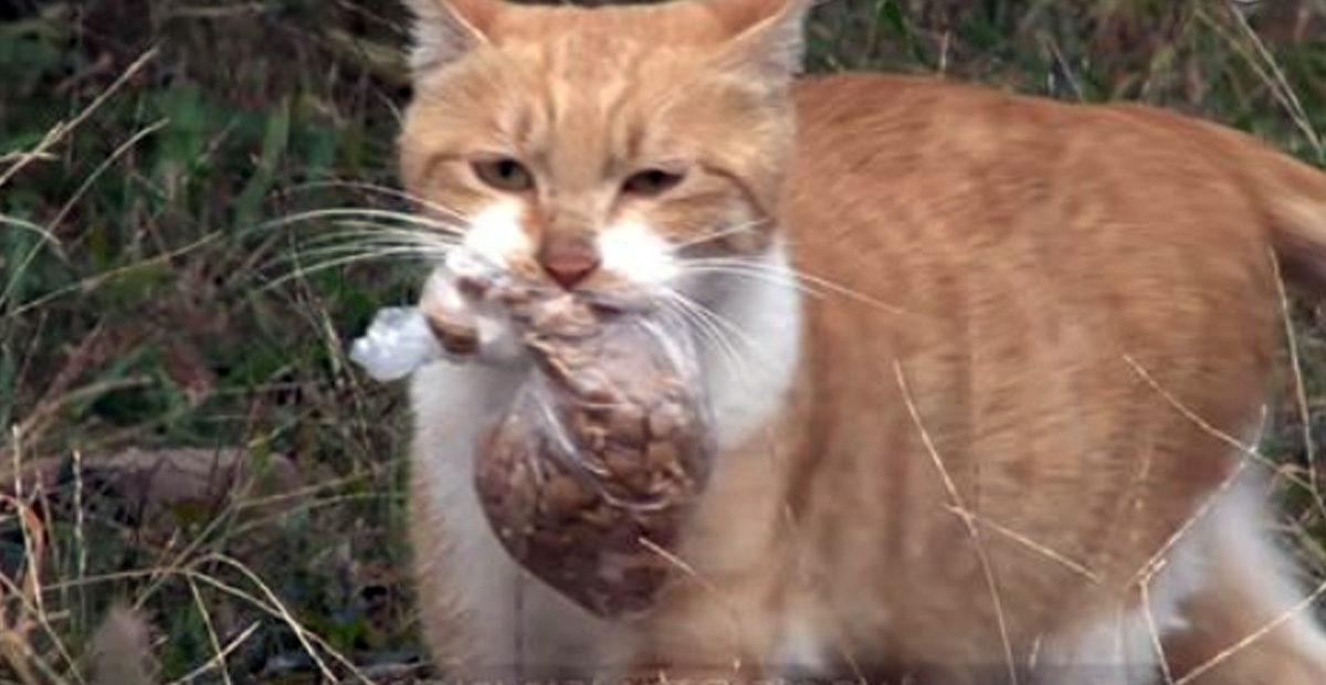 Street Cat Will Only Take Food From Humans If It's In A Bag. One Day They Follow Her
