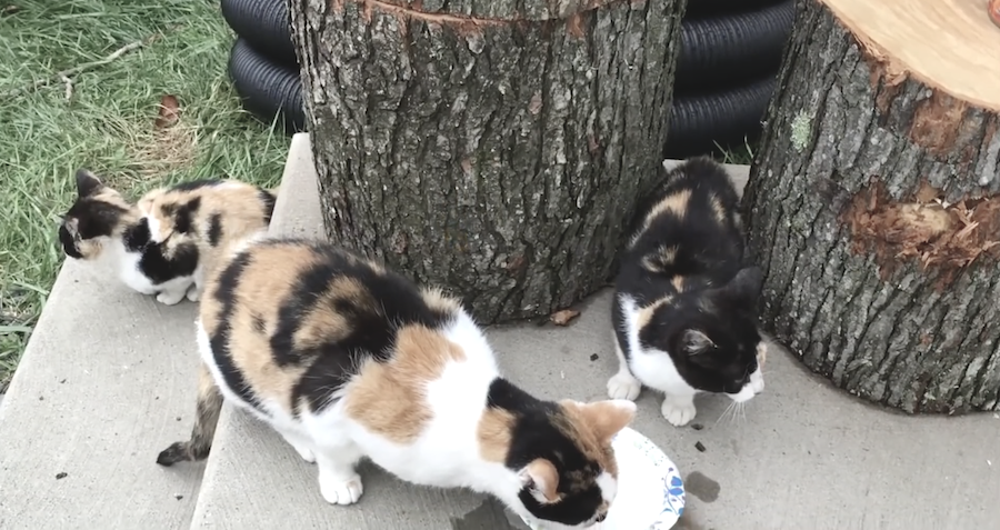 3 cats returned to woman's house everyday…She's no cat person but wait till you see what she does!