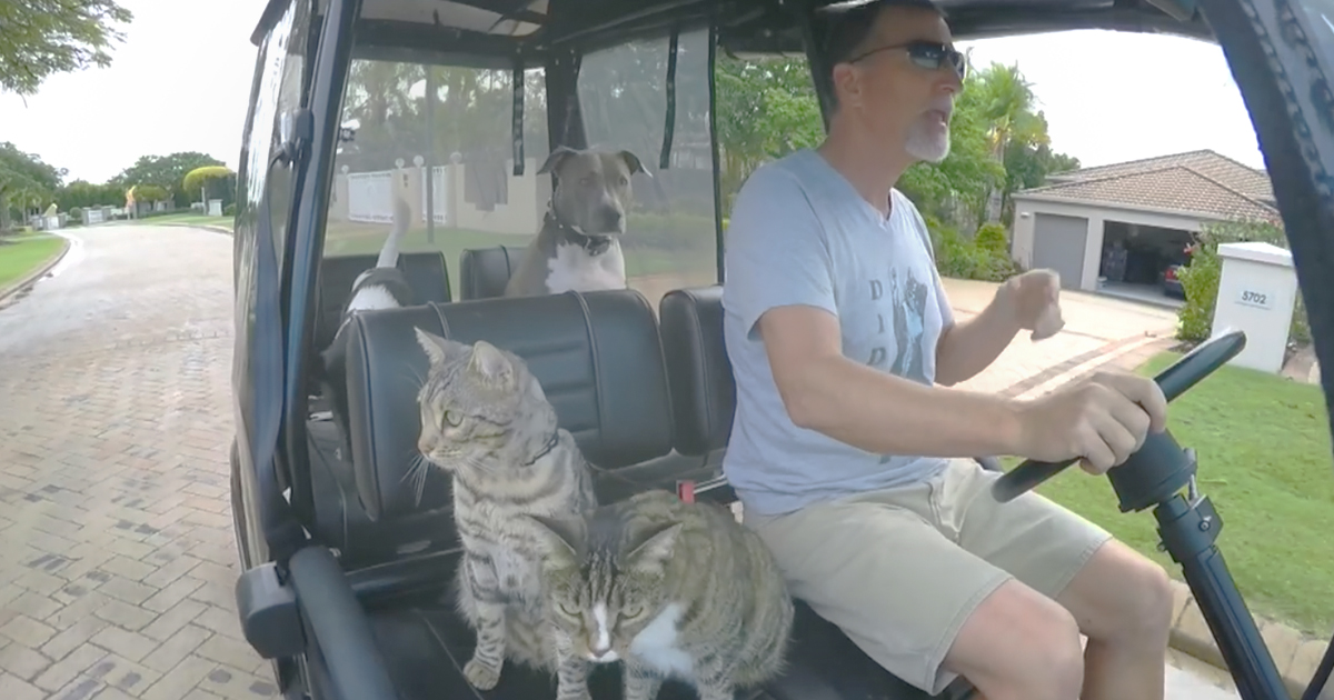 Cats and Dogs jump into golf cart, but when he turns up the music… I just can't stop laughing!!!