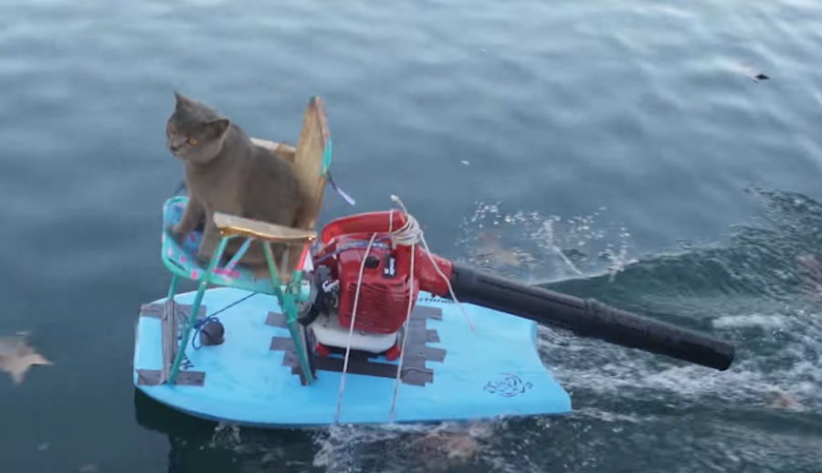 Ducks steal this cat's treats, but his comeback will have you in stitches!