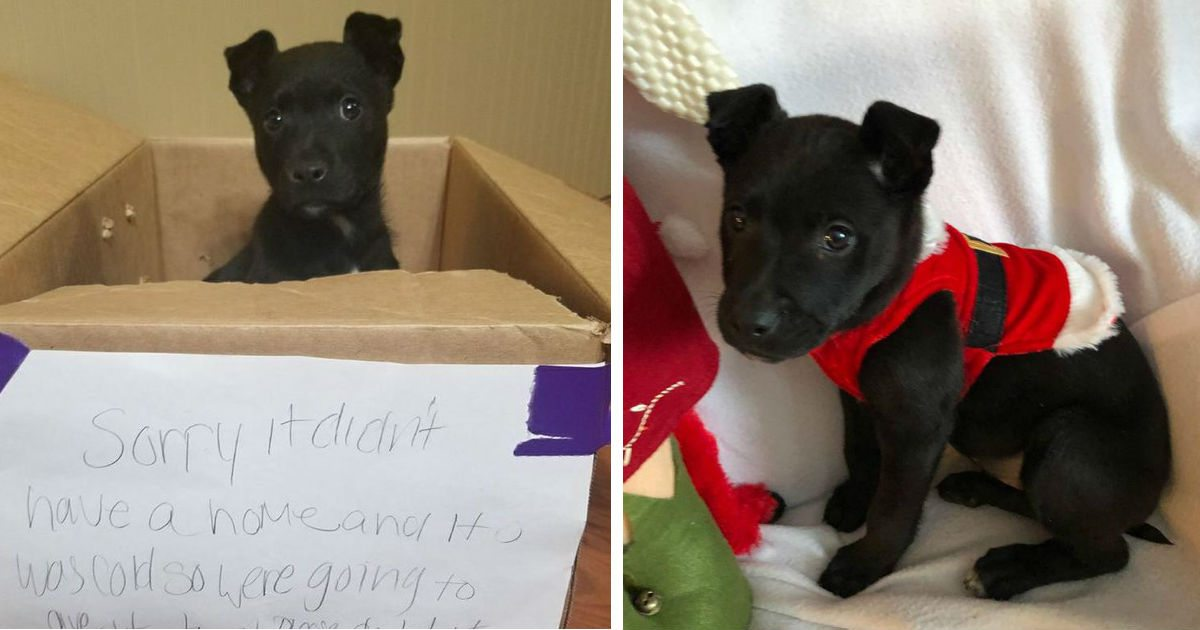 Little Boy Leaves Puppy In Box Outside School With A Note