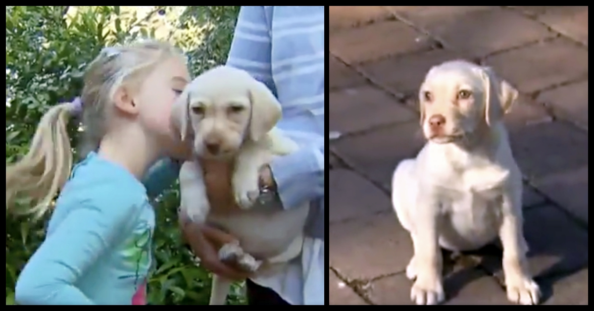 Family Turns To Facebook After Their Puppy Was Stolen, Robber's Response Surprises Everyone!