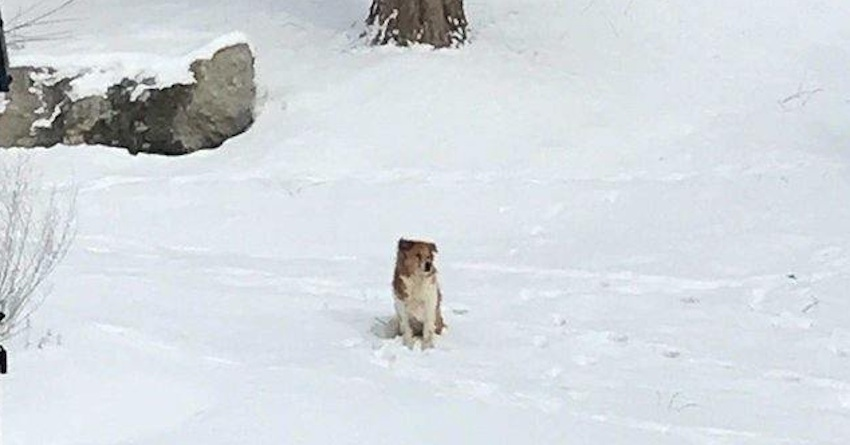 Abandoned Dog Waited For Her Family In The Snow – For Five Days