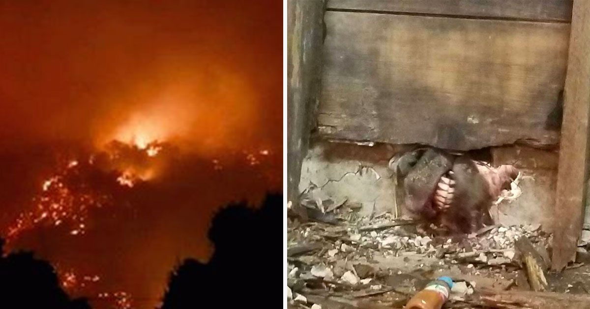 Woman reports on Wildfire, sees a pair of white teeth in flames and knows she can't just leave