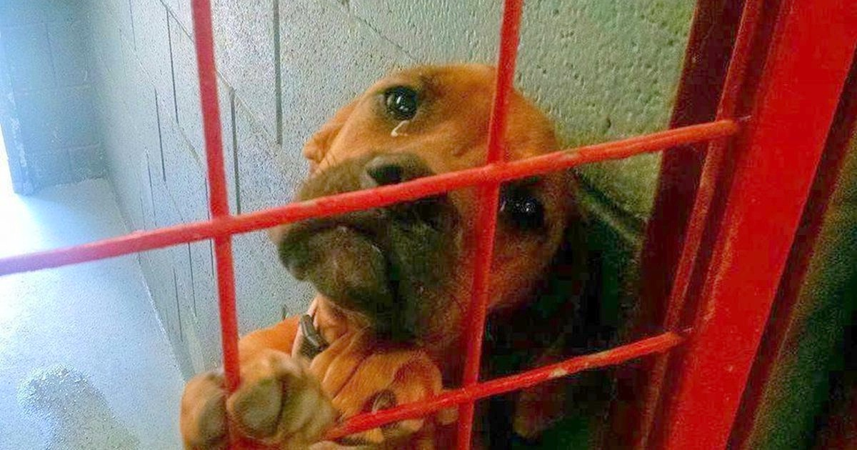 Dog Cries All Night As No One Picks Her, Then Shelter Shares Her Photo As A Last Resort