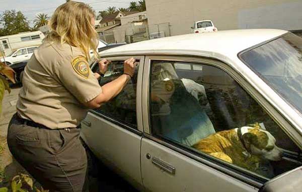 New law being passed makes it a felony to leave a pet in a hot car. Do you support this idea?