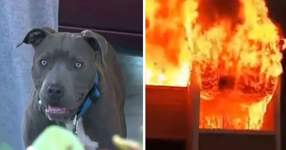 Pit Bull drags 7-month-old baby from house fire by diaper