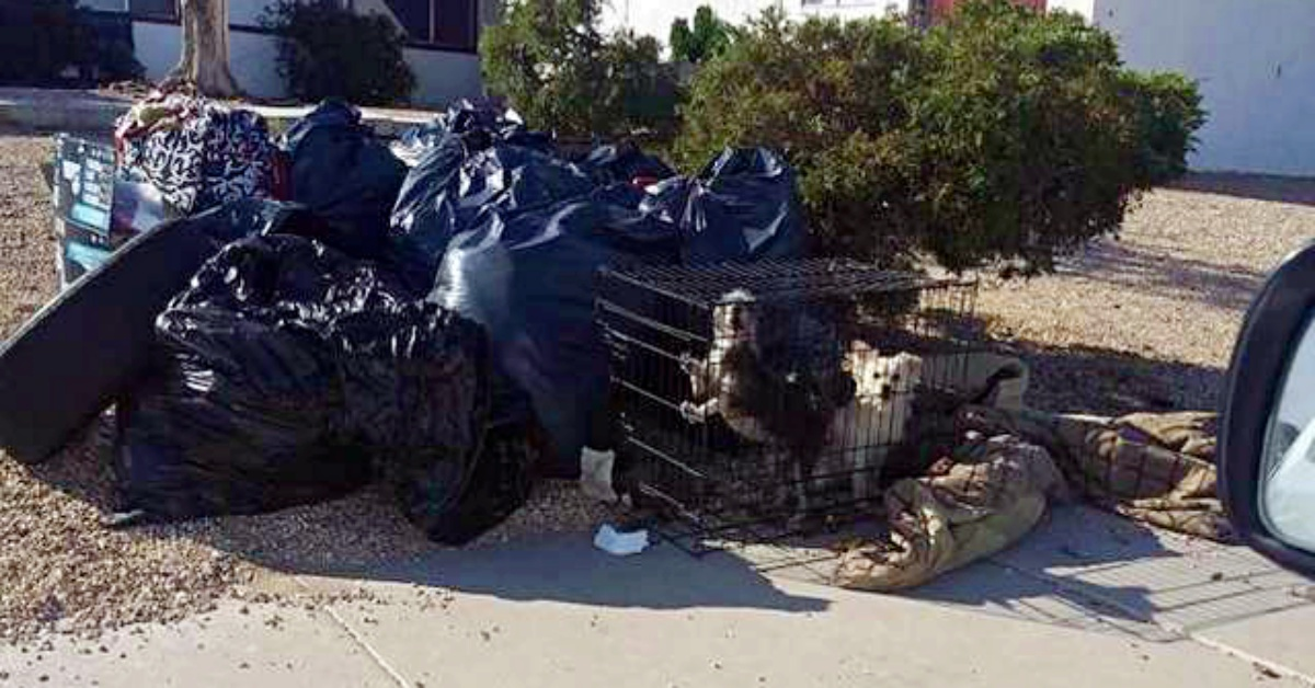 Woman moved and left her terrified dogs caged on the sidewalk with the trash