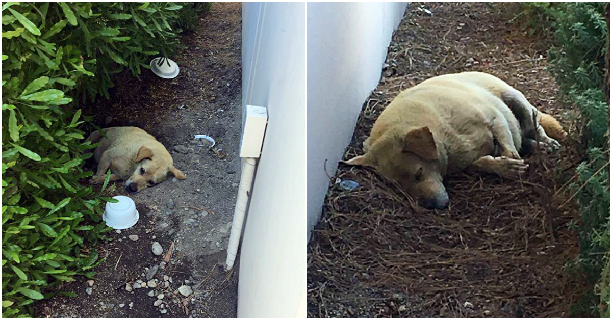 Old dog slept in the dirt every day after his owners moved and left him behind