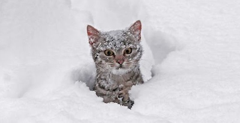 People let cats outside to discover snow for the first time, but then gets hilarious response!