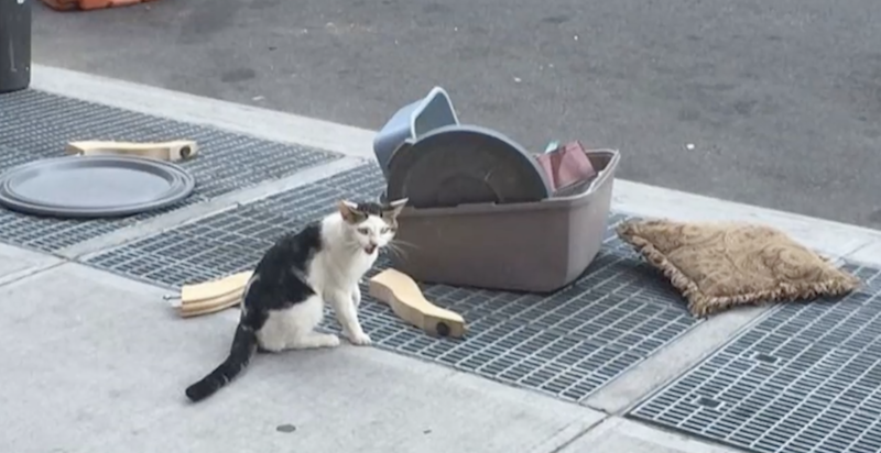 Poor cat found crying for help next to his litter box and belongings after he was thrown onto streets