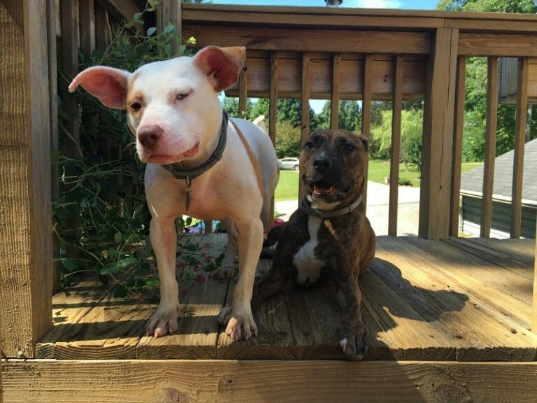 Animal Rescuers saves two dogs