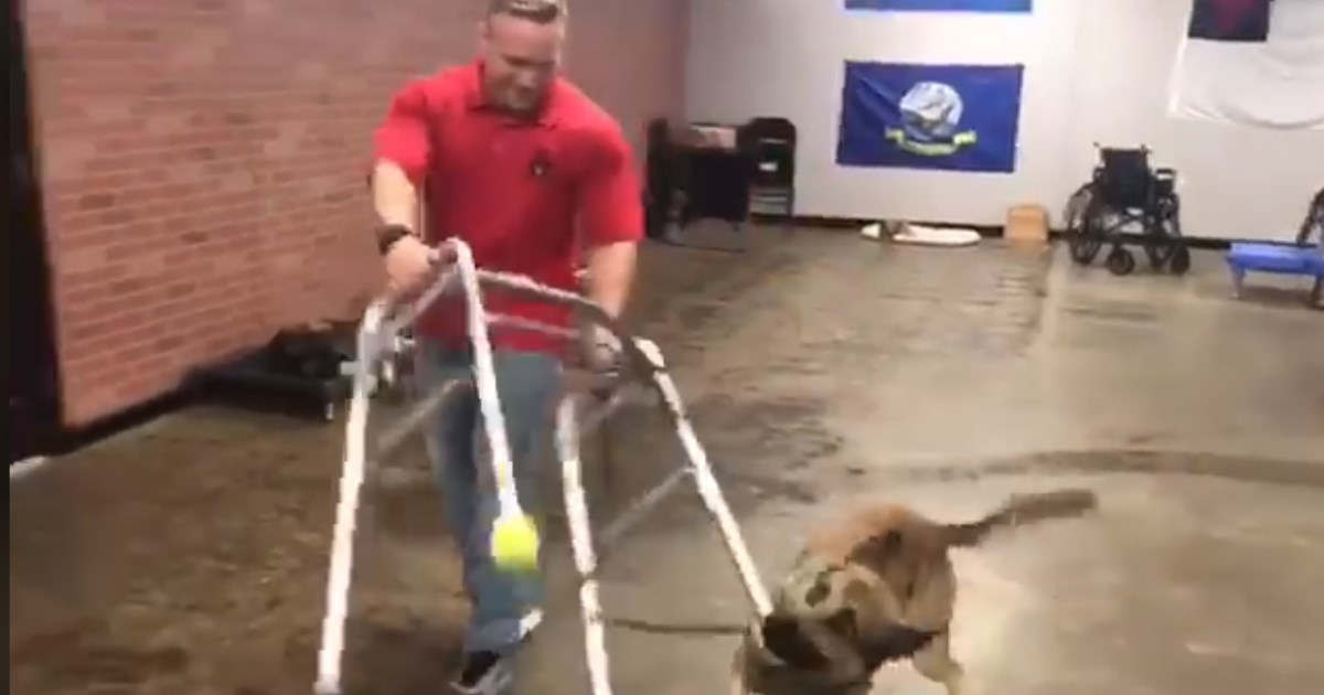 Energetic dog hilariously fails his service dog training test & we're so in love