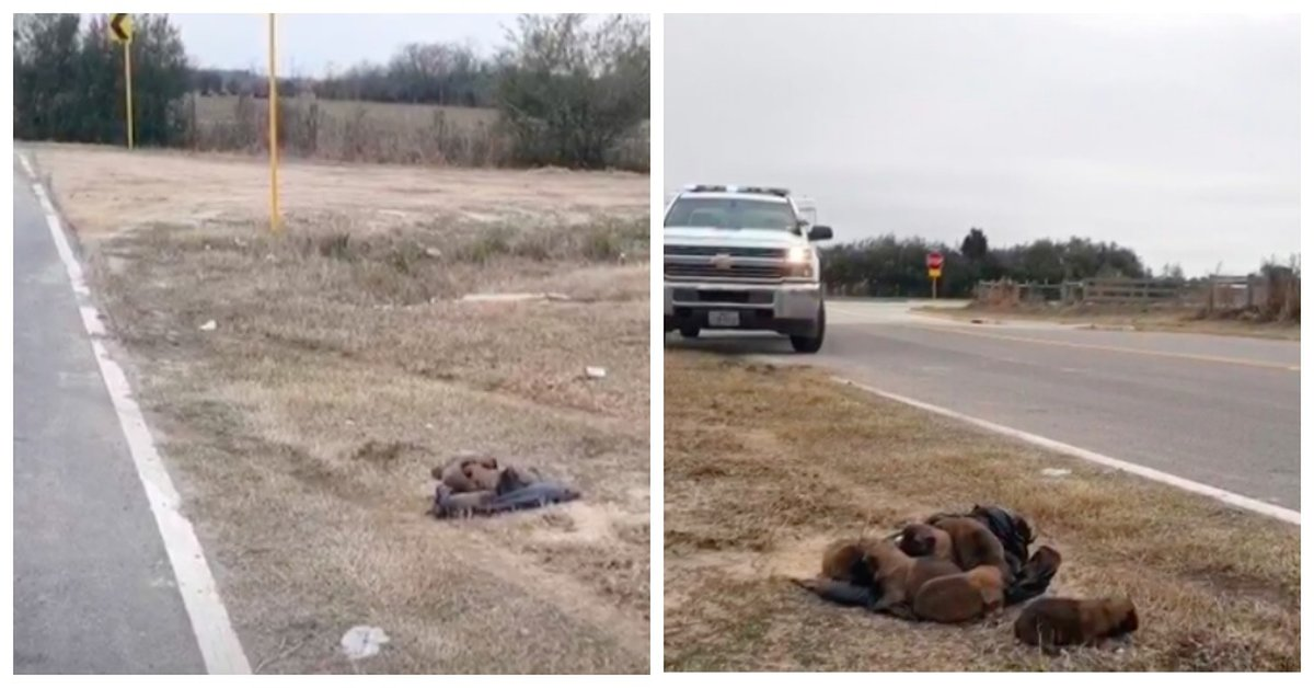 Monster Throws 8 Newborn Puppies Out Of A Moving Vehicle