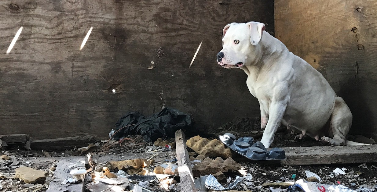 Dog who was chained up after her owner was murdered is finally free from nightmare