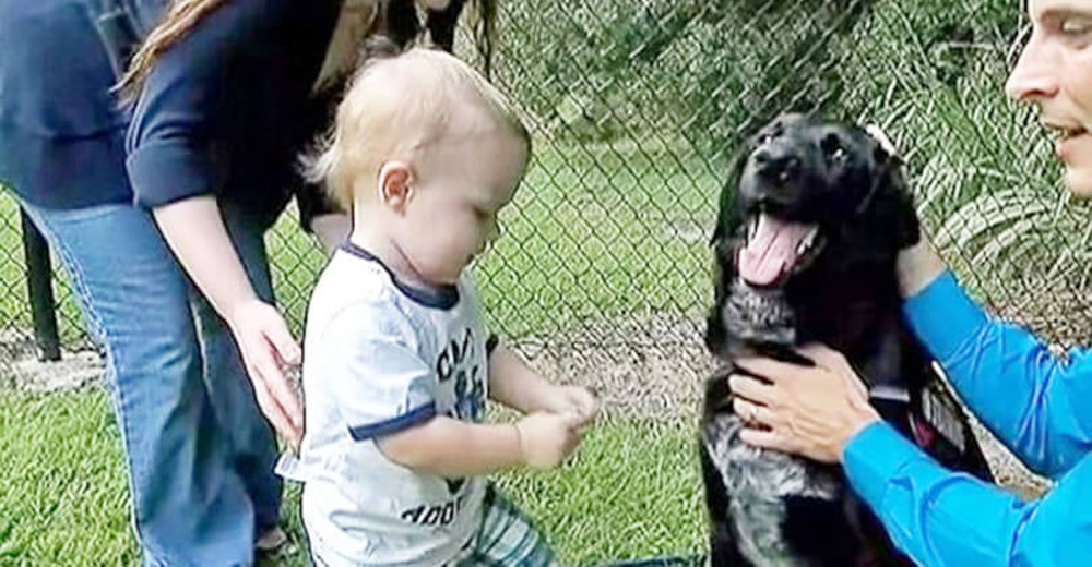 Family dog doesn't like the baby's sitter. That's enough for the parents to raise the alarm