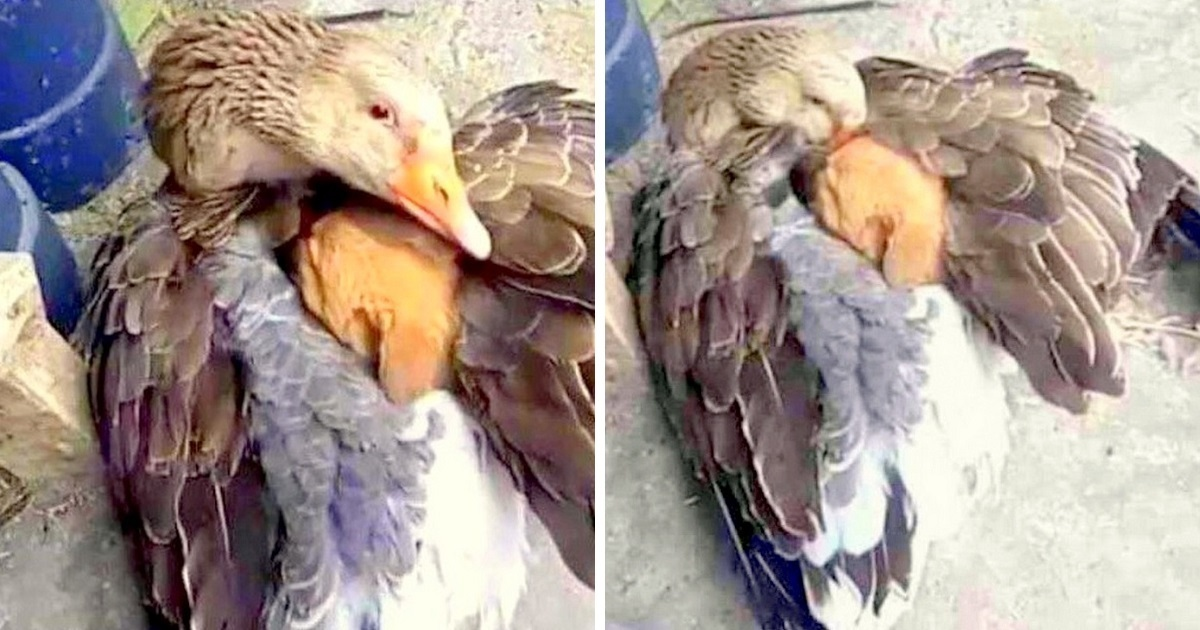 Abandoned Puppy Shivering in the Cold – Goose Shelters Him under Her Wings