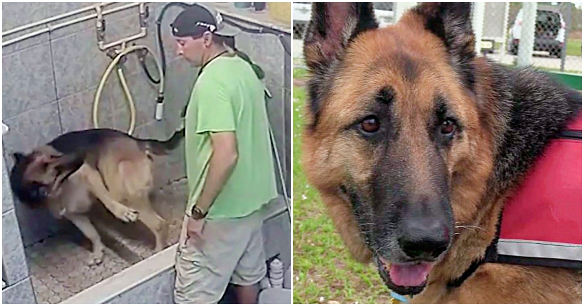 Groomer arrested after breaking service dog's tail because she 'wouldn't sit still'