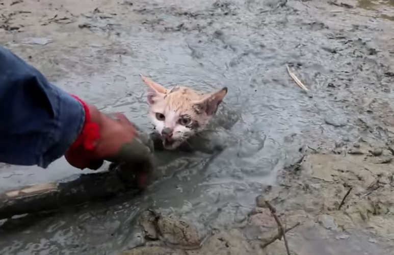 Kitten was stuck in the mud at a pond before a quick thinking man saved its life